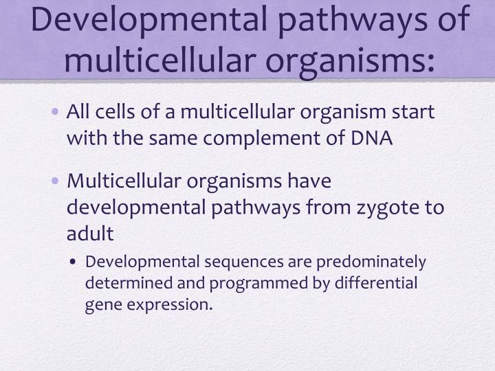 Developmental pathways of multicellular organisms
