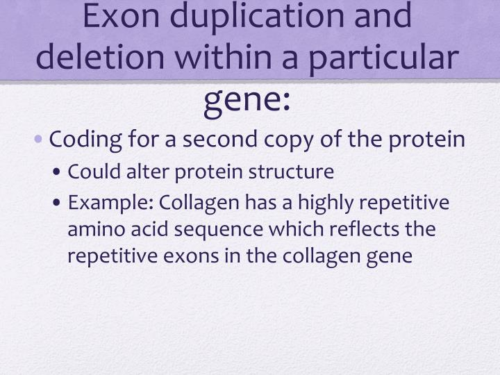 Exon duplication and deletion within a particular gene:
