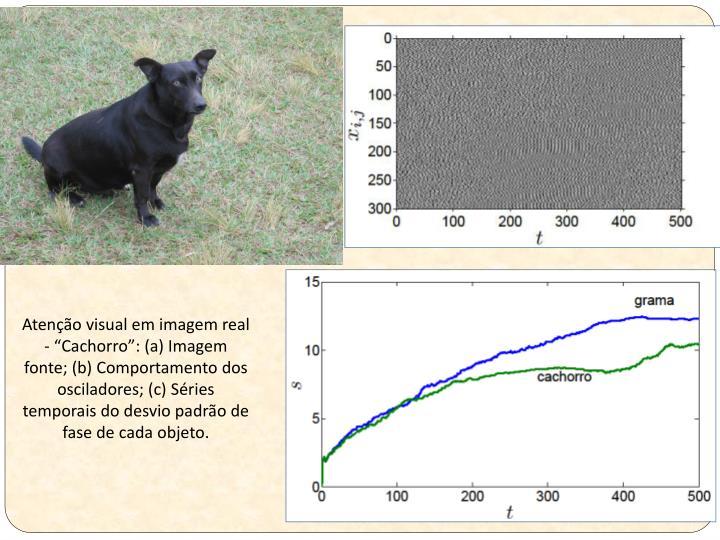"""Atenção visual em imagem real - """"Cachorro"""": (a) Imagem fonte; (b) Comportamento dos osciladores; (c) Séries temporais do desvio padrão de fase de cada objeto."""