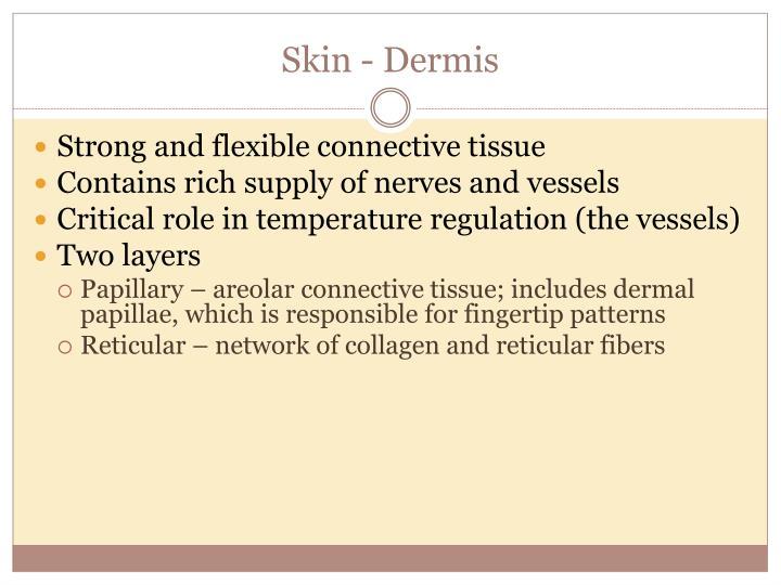 Skin - Dermis