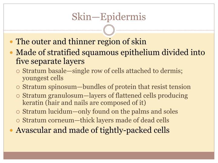 Skin—Epidermis