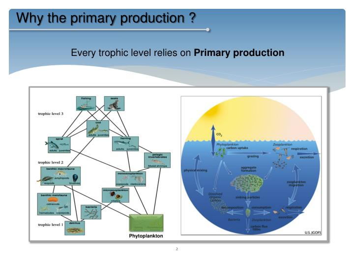 Why the primary production ?