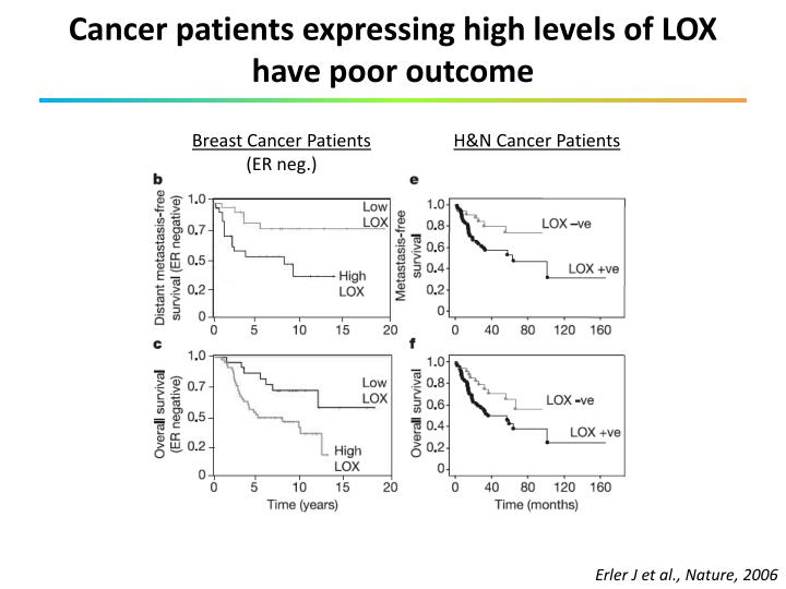Cancer patients expressing high levels of LOX have