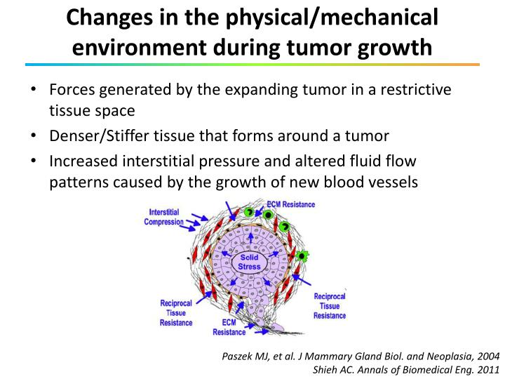 Changes in the physical/mechanical environment during tumor growth