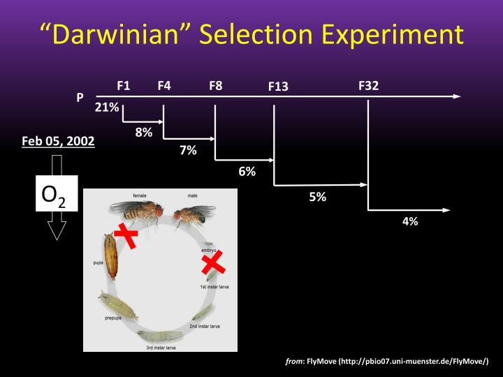 """""""Darwinian"""" Selection Experiment"""