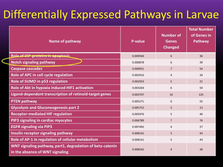 Differentially Expressed Pathways in Larvae