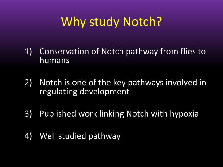 Why study Notch?