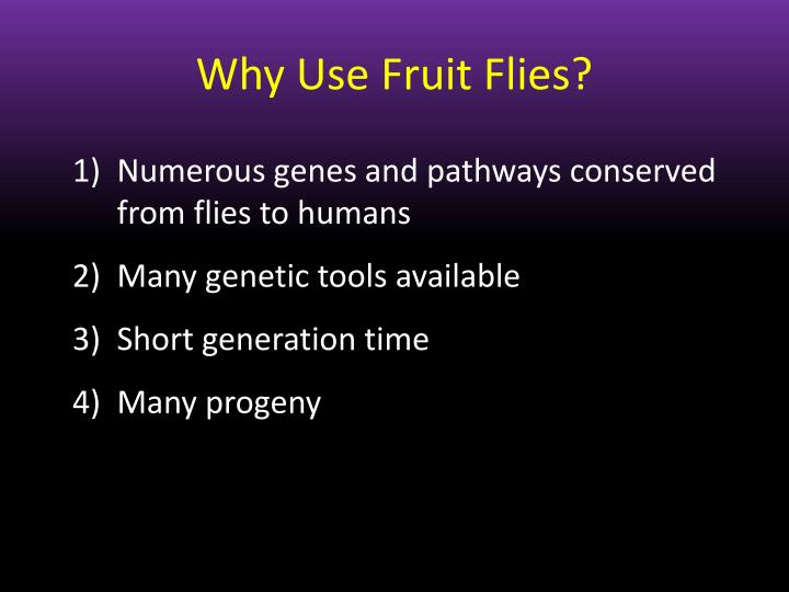 Why Use Fruit Flies?