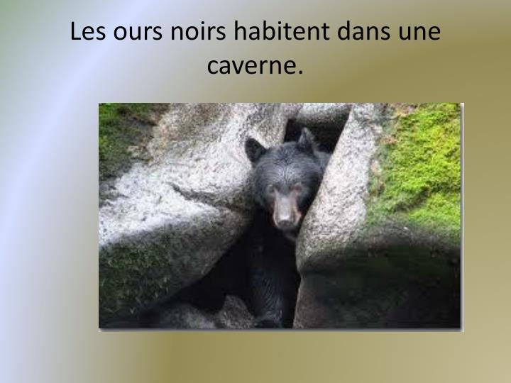 Les ours noirs