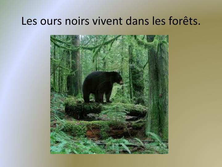 Les ours noirs vivent