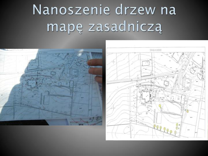 Nanoszenie drzew na map zasadnicz