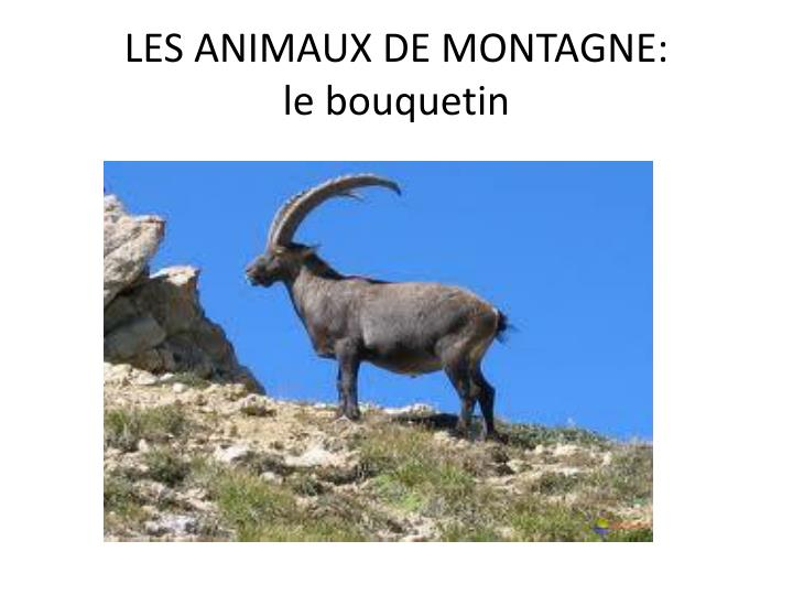 LES ANIMAUX DE MONTAGNE: