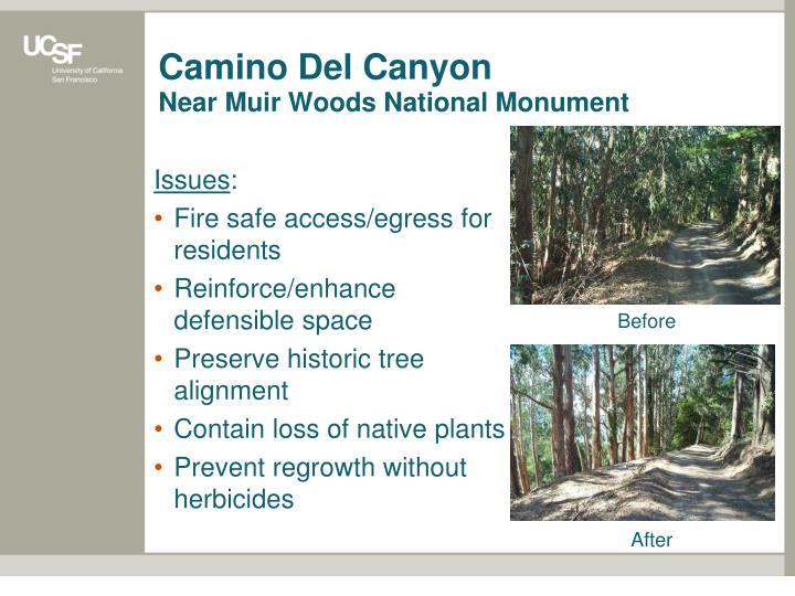 Camino Del Canyon