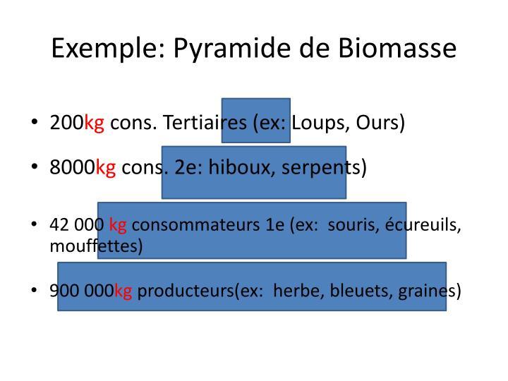 Exemple: Pyramide de Biomasse