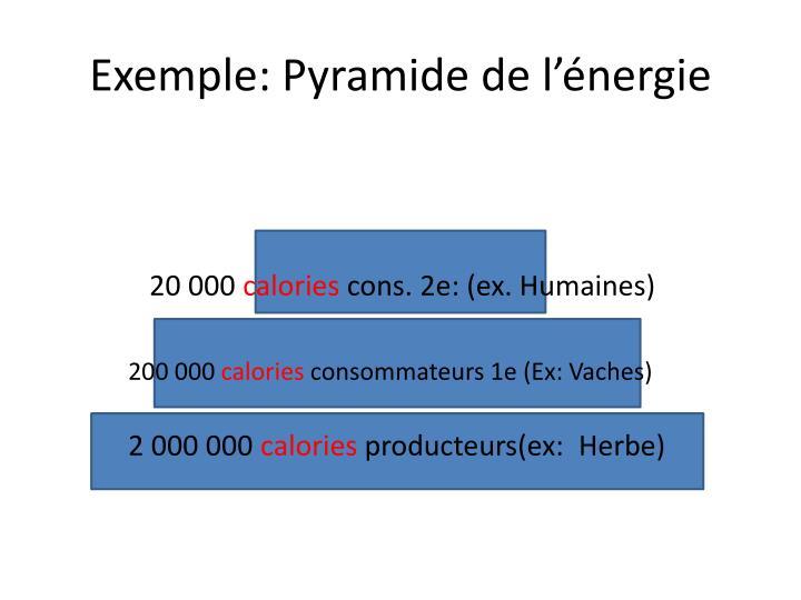 Exemple: Pyramide de l'énergie