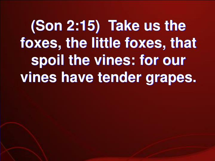 (Son 2:15)  Take us the foxes, the little foxes, that spoil the vines: for our vines have tender grapes.