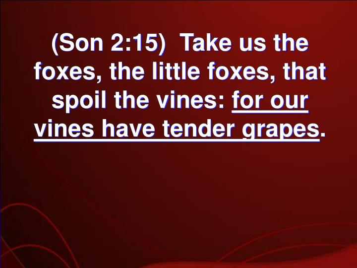 (Son 2:15)  Take us the foxes, the little foxes, that spoil the vines: