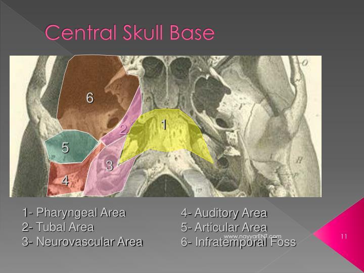 Central Skull Base