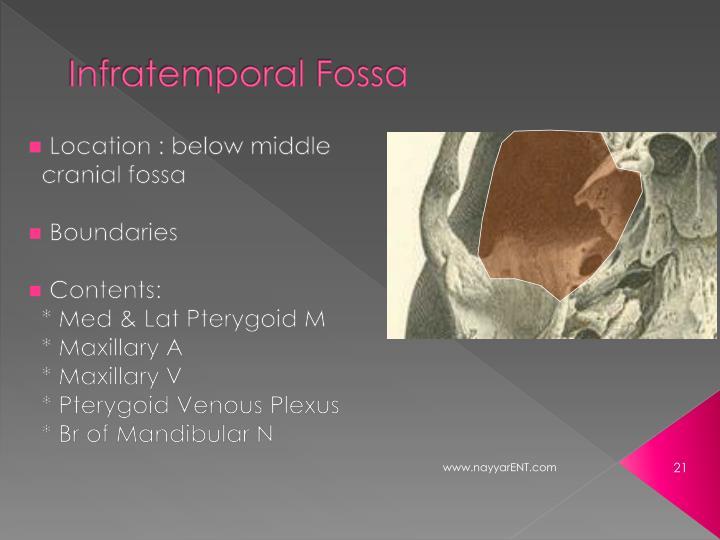 Infratemporal Fossa