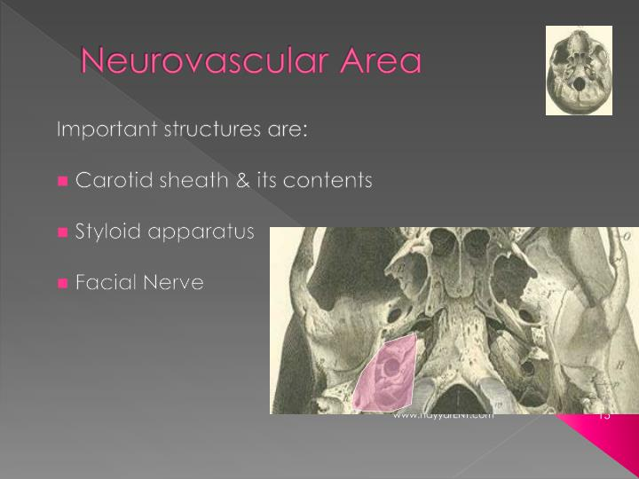 Neurovascular Area