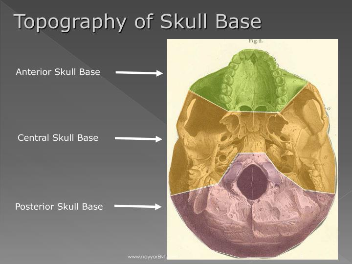 Topography of Skull Base