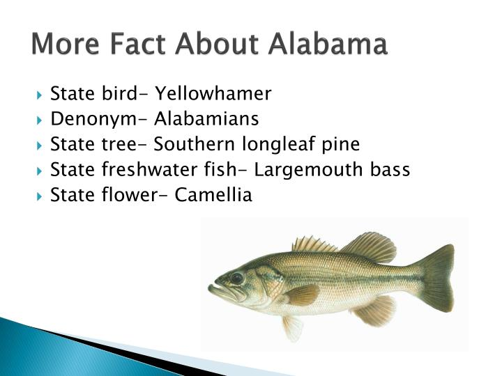 More Fact About Alabama