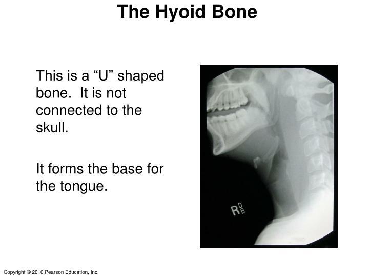 The Hyoid Bone