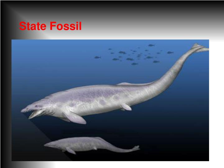 State Fossil