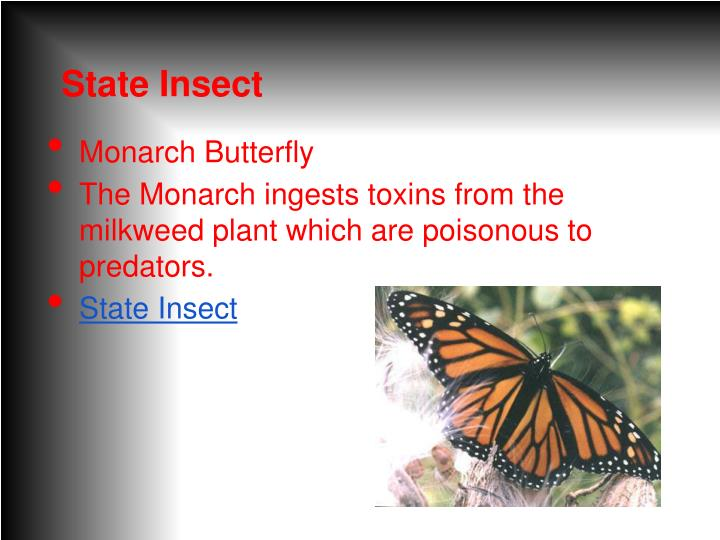 State Insect