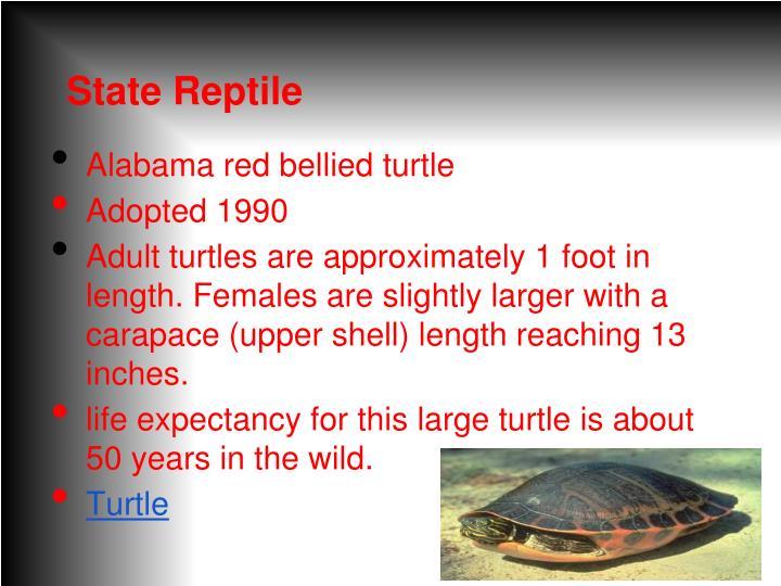 State Reptile