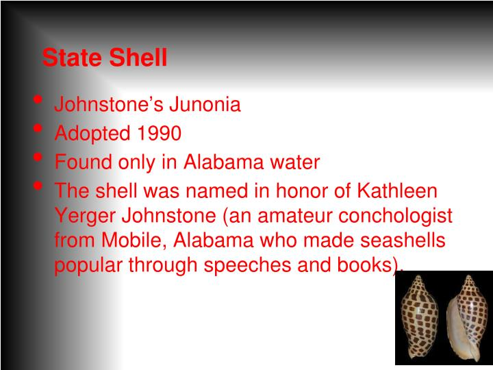 State Shell
