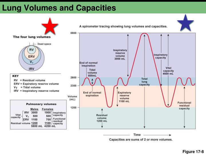 Lung Volumes and Capacities