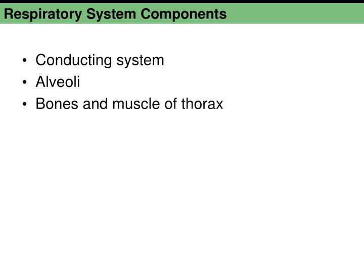 Respiratory System Components