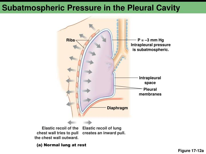 Subatmospheric Pressure in the Pleural Cavity