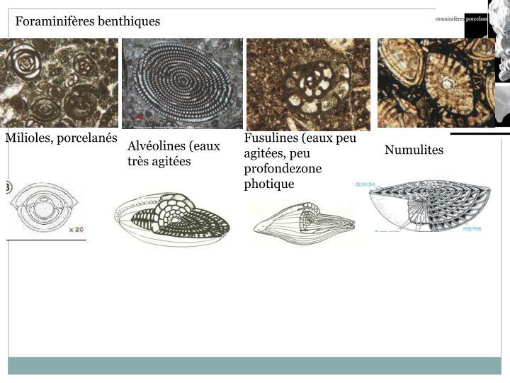 Foraminifères benthiques
