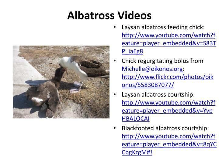 Albatross Videos