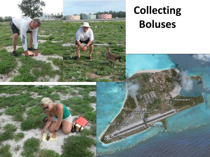 Collecting Boluses