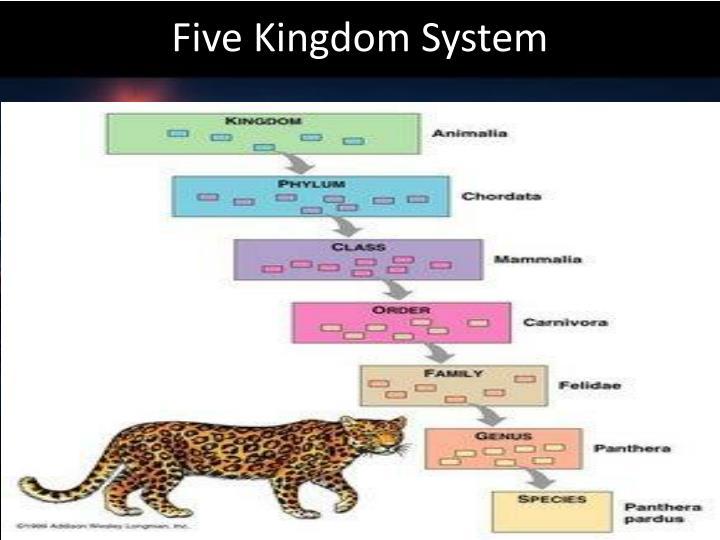 Five Kingdom System