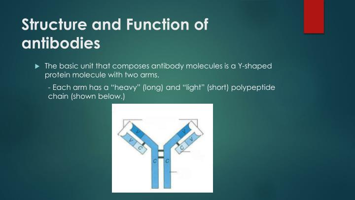Structure and Function of antibodies