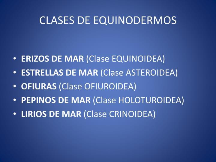 CLASES DE EQUINODERMOS