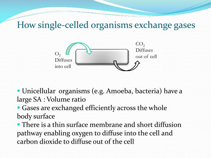 How single-celled organisms exchange gases