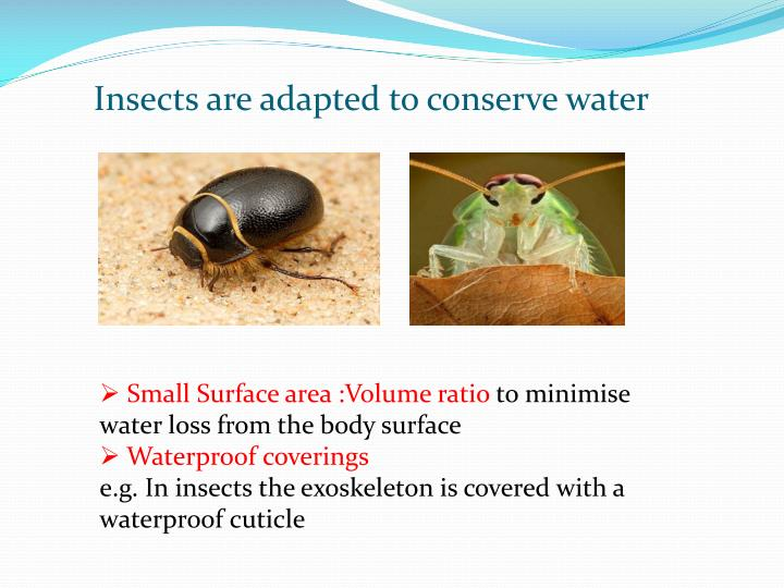 Insects are adapted to conserve water