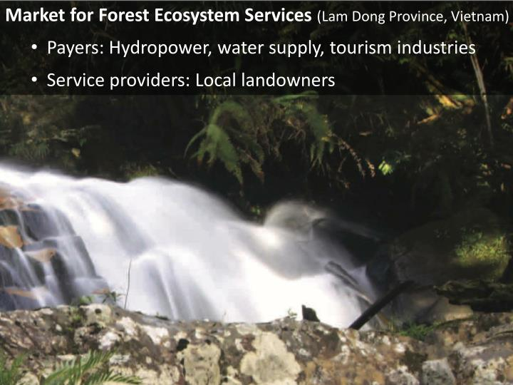 Market for Forest Ecosystem Services