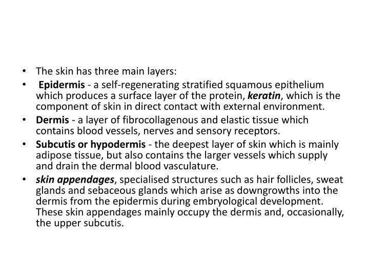 The skin has three main layers: