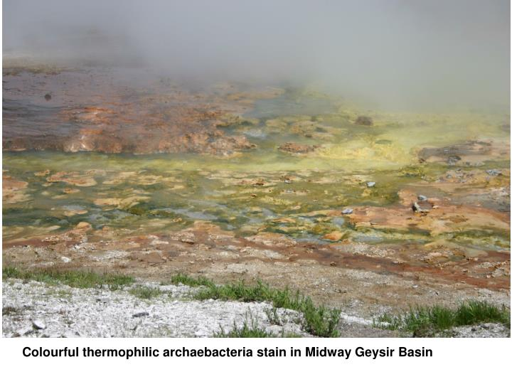 Colourful thermophilic archaebacteria stain in Midway Geysir Basin