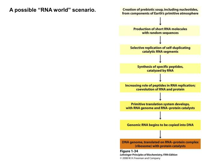 """A possible """"RNA world"""" scenario."""