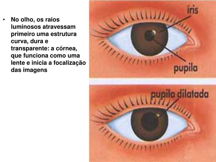 No olho, os raios luminosos atravessam primeiro uma estrutura curva, dura e transparente: a córnea, que funciona como uma lente e inicia a focalização das imagens