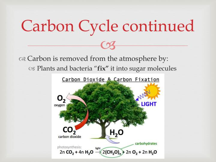 Carbon Cycle continued