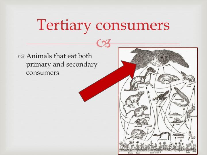 Tertiary consumers