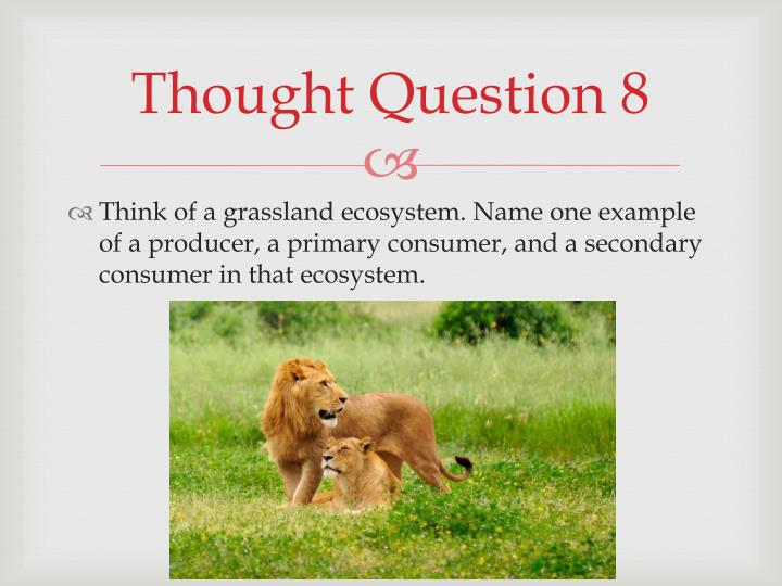 Thought Question 8